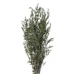 Fleurs stabilisées - composition florale stabilisée