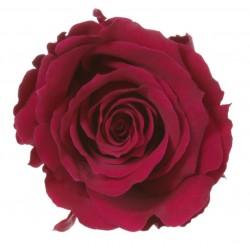 Rose Extra Byzance - boîte...