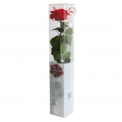 Rose sur tige (XL) rouge