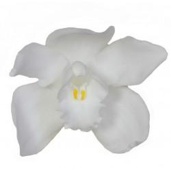 Orchidée Cymbidium (L)...